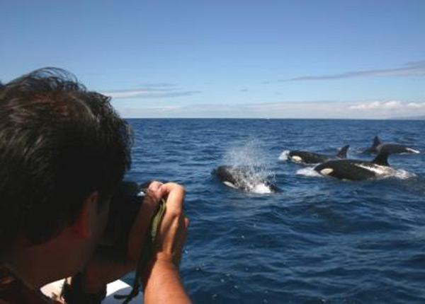 hoteles con encanto en tarifa y orcas
